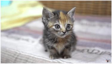 おすすめ人気の猫動画を紹介!可愛い赤ちゃんに夢中?「おいおい」としゃべる猫が話題?面白くておかしい映像に癒されよう!