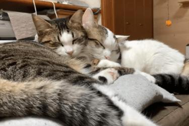 【ひのき猫】収入や息子・娘を調査!気になる小猫の性別は?カレンダーにも注目!愉快な猫たちの日常と成長を動画で覗いてみよう