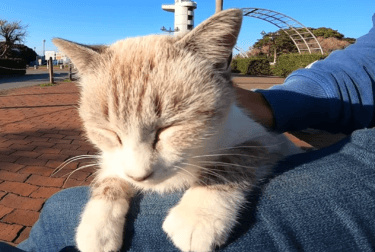 感動猫動画