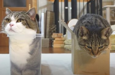 【mugumogu】はなとまるの日常動画から人気を検証!住所や年収って?まるですシリーズの可愛い箱の入り方も要チェック