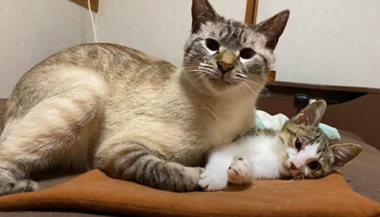 猫のデュフィ